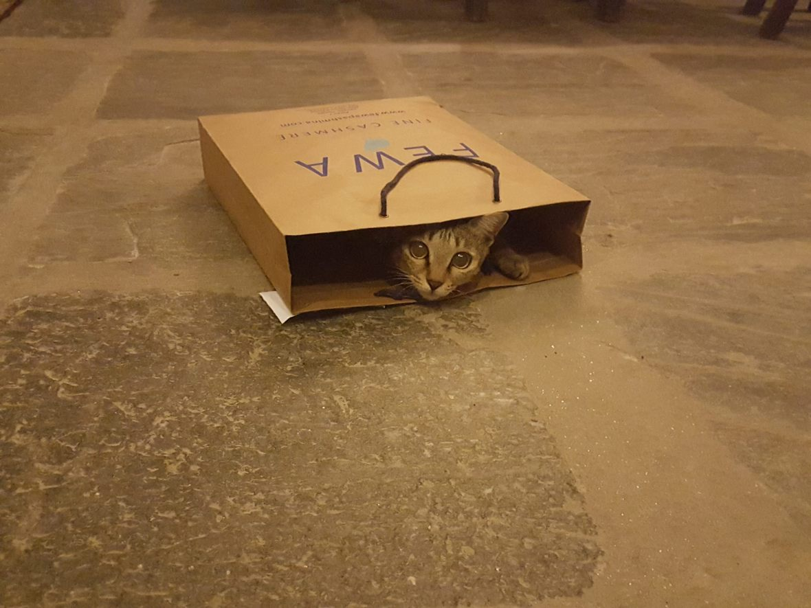 Rosy in a bag - the youngest cat member at Tings Kathmandu